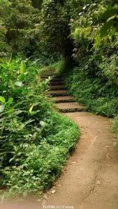 iruppu-falls-path-walking-trail